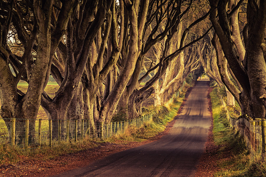 The Hedges, Northern Ireland